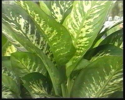 Fitosofia vivero de plantas ornamentales segunda parte for Clases de plantas ornamentales