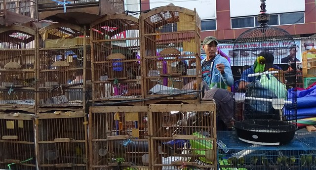 Yayasan Scorpion Apresiasi Pemerintah Tangani Penyeludupan Burung Sumatera