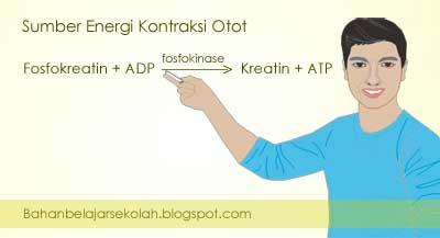 sumber energi untuk kontraksi otot