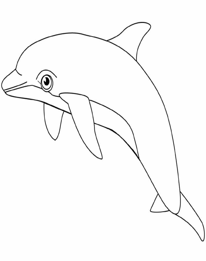 Картинки контур дельфина