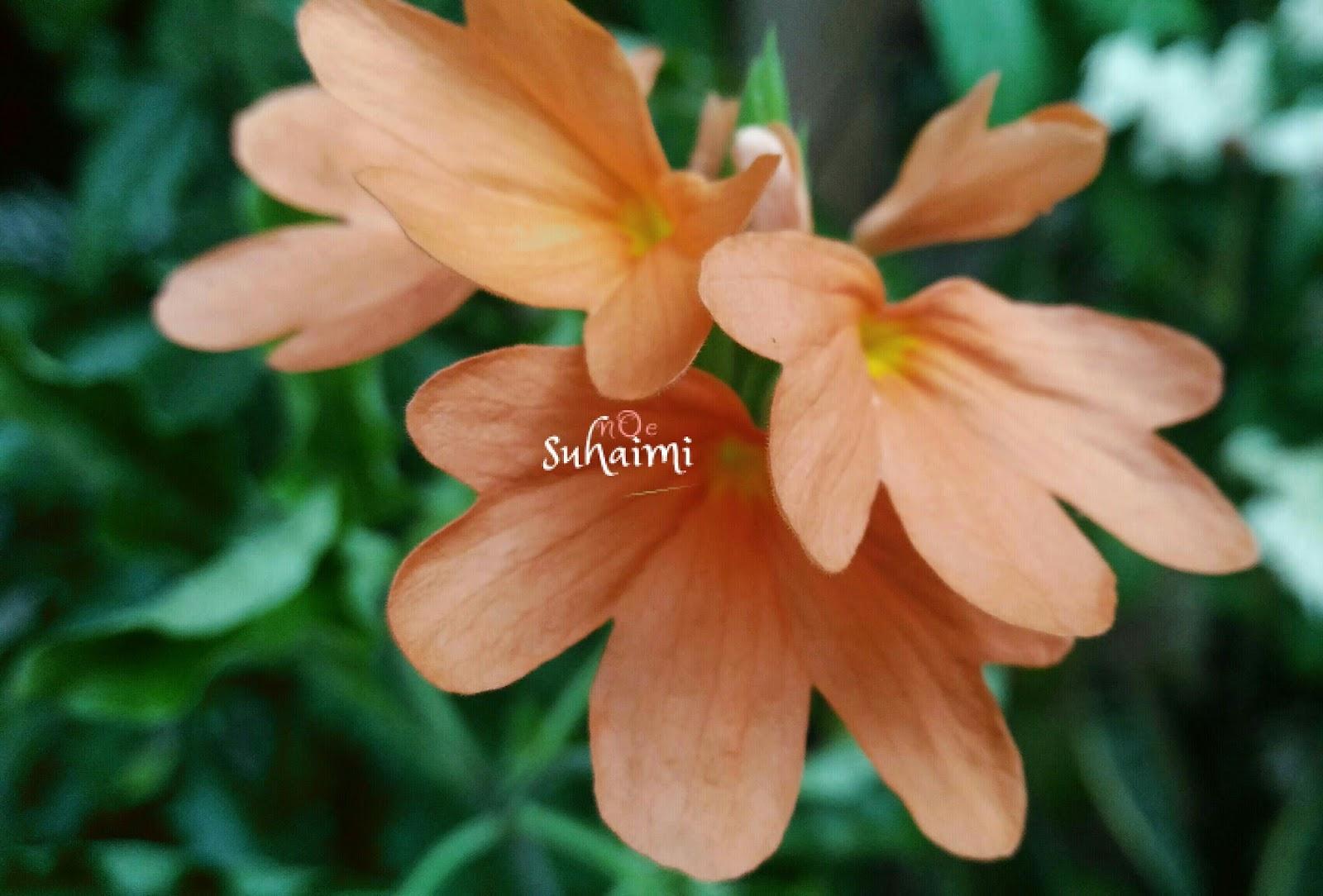 Bunga oren