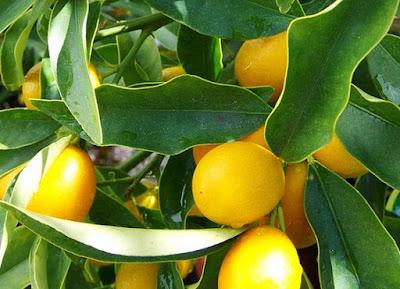 Berbagai Contoh dan Manfaat Buah yang Mengandung Vitamin C