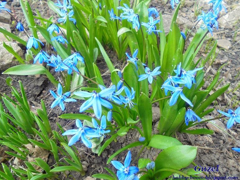 самые первые цветы на даче