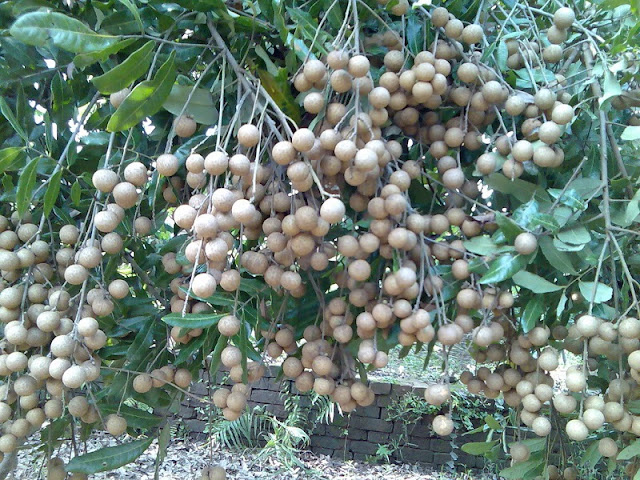 Discover Bac Lieu - A peaceful palce Vietnam Mekong Delta 3