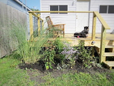 plantings landscaping backyard