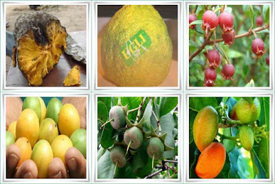 Fruit Names Beginning With U
