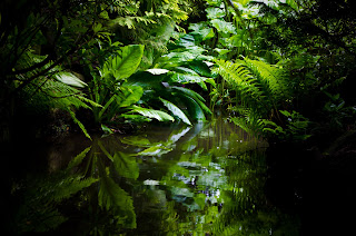 Jungle by by George Hodan