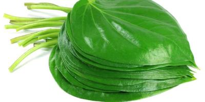 Cara Mengobati Penyakit Hernia dengan daun sirih