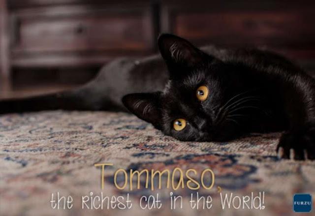 Kucing Tommaso mendapatkan warisan Maria Assunta