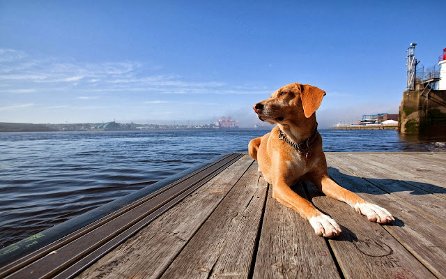 Hond op de kade van een haven