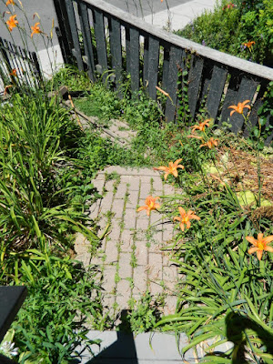 Leslieville Front Garden Summer Cleanup Before by Paul Jung Gardening Services--a Toronto Gardening Company