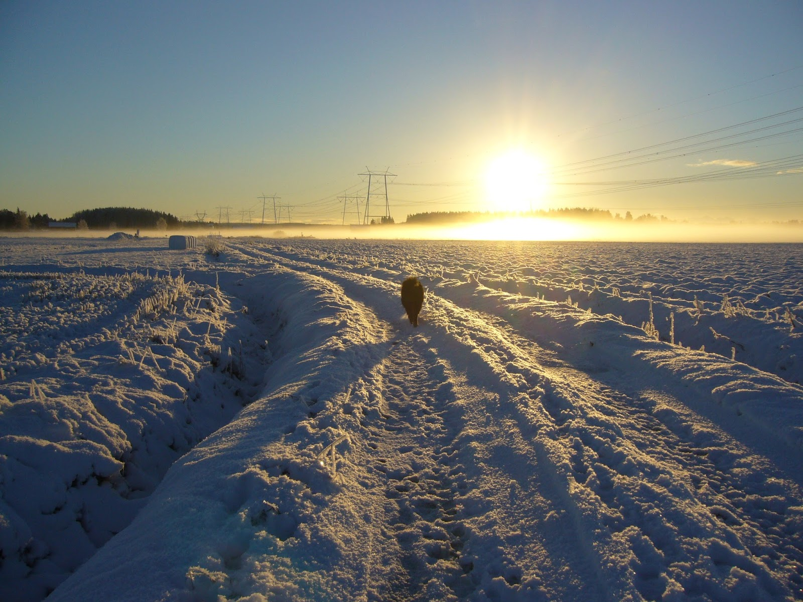 Great Lakes Kollageeni