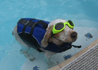 Life jacket dog with goggles