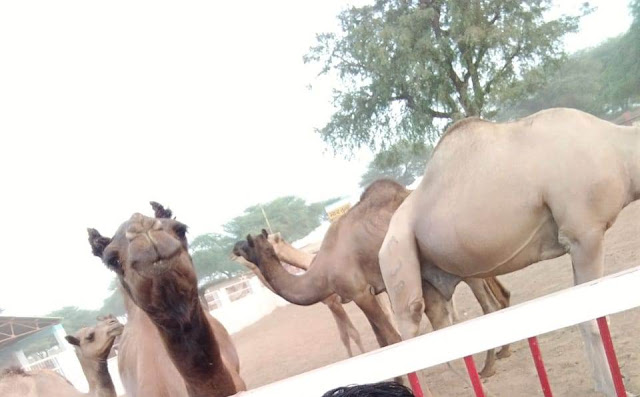 National Camel Research Center