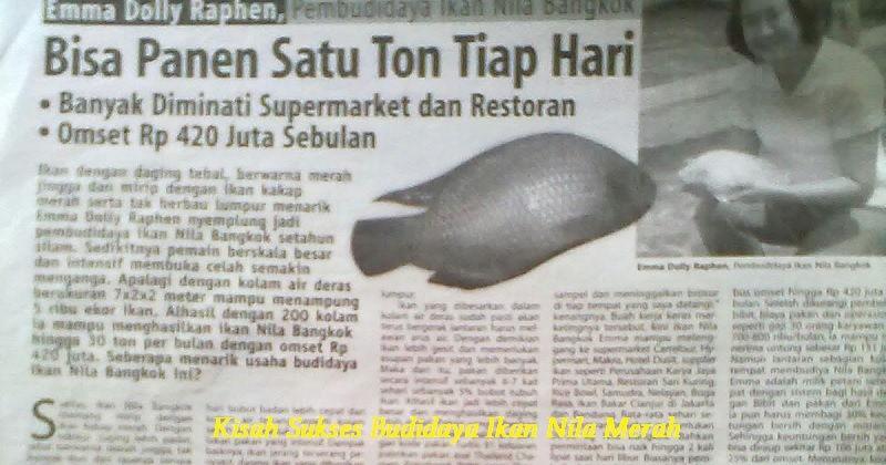 Kisah Sukses Budidaya Ikan Nila Merah - Emma Dolly Raphen