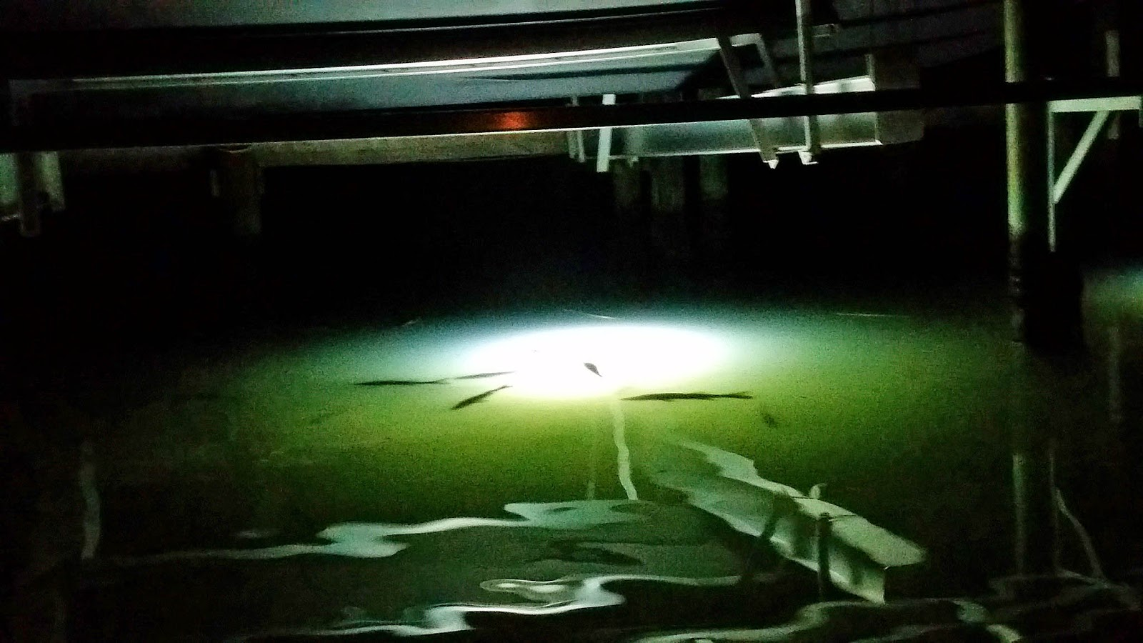 Southern kayak kronicles for Trout fishing at night