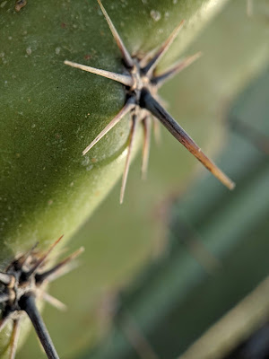 Cactus spine - macro.