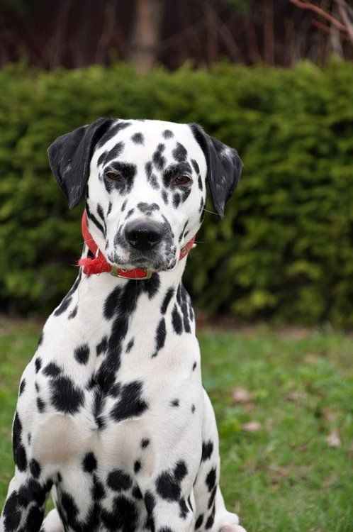 Top 5 Most Beautiful Dogs Breed