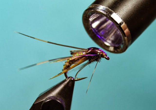 Fly Tying Nation: Sparkling Pupae