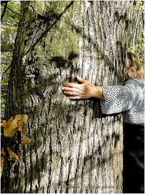 Etreindre un arbre serait bon pour la santé...
