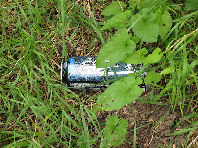 Shiny energy drink can thrown away in the grass