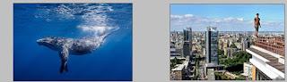 Cara Edit Foto Ikan di Langit  Seperti Video Clip Coldplay Up & Up dengan Photoshop