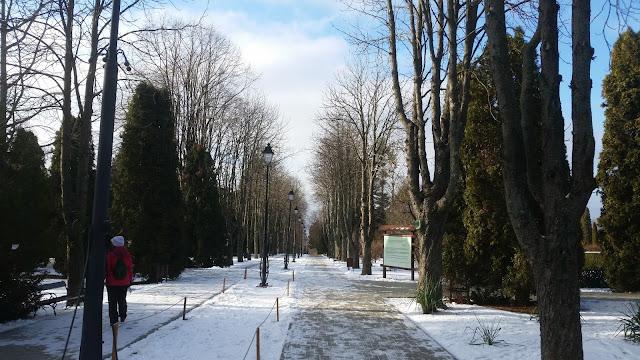השדרה הראשית בגן הבוטני