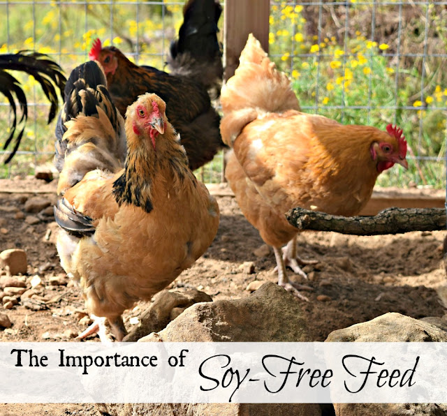 Why soy-free feed is important.
