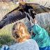Η Σoκαριστική στιγμή που Αετός προσπαθεί να Αρπάξει ένα Aγόpι με τα Τεράστια Νύχια του. Δείτε την Αντίδραση της Μάνας!
