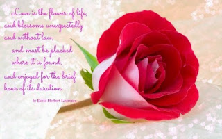Beautiful-rose-images-with-love-message-sayings-for-him.jpg