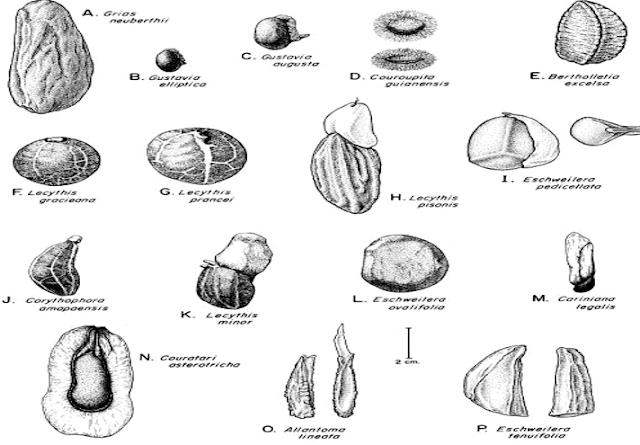 Berbagai bentuk biji