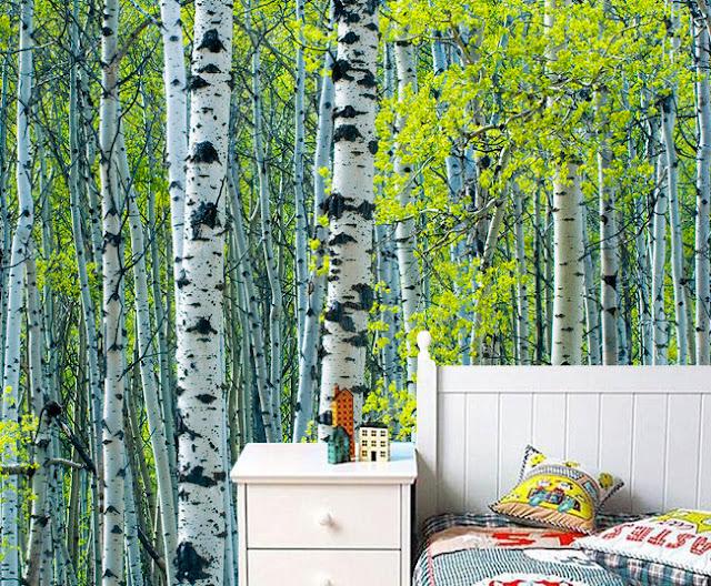 Metsä Tapetti koivu Valokuvatapetti Metsät