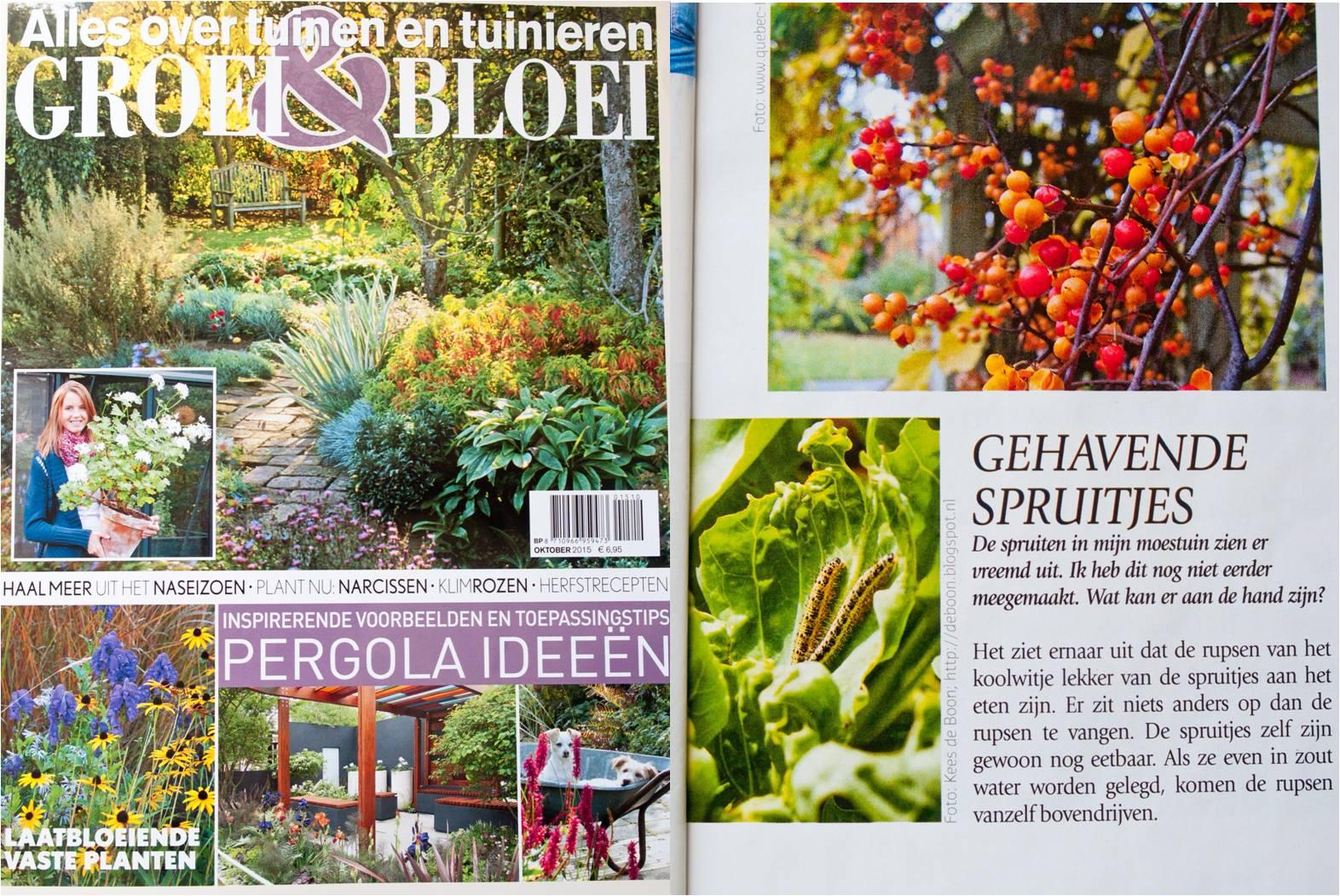 spruiten spruitkool spruitjes rupsen groei bloei media magazine