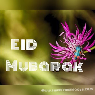 haay eid holiday