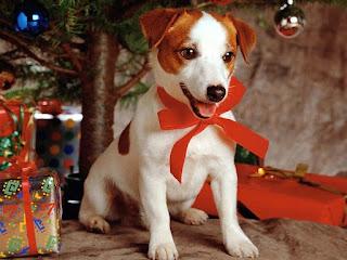 Baum Hund Schnee Geschenk