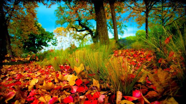 full hd 1080p nature wallpaper image