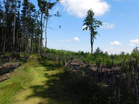 Otwarte tereny między Szeroką i Przełęczą Woliborską.