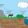 Siklus Daur Fosfor : Proses, Tahapan, dan Gambar Ilustrasinya