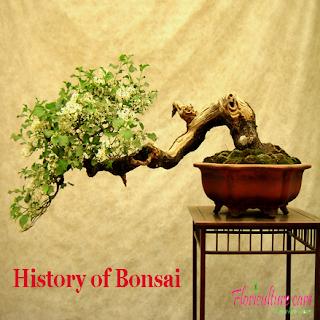 History of Bonsai