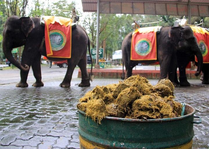 Wow, Kotoran Gajah Bisa Menjadi Bahan Pembuat Kertas