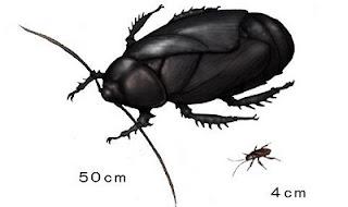 Cucaracha prehistórica Aphthoroblattina