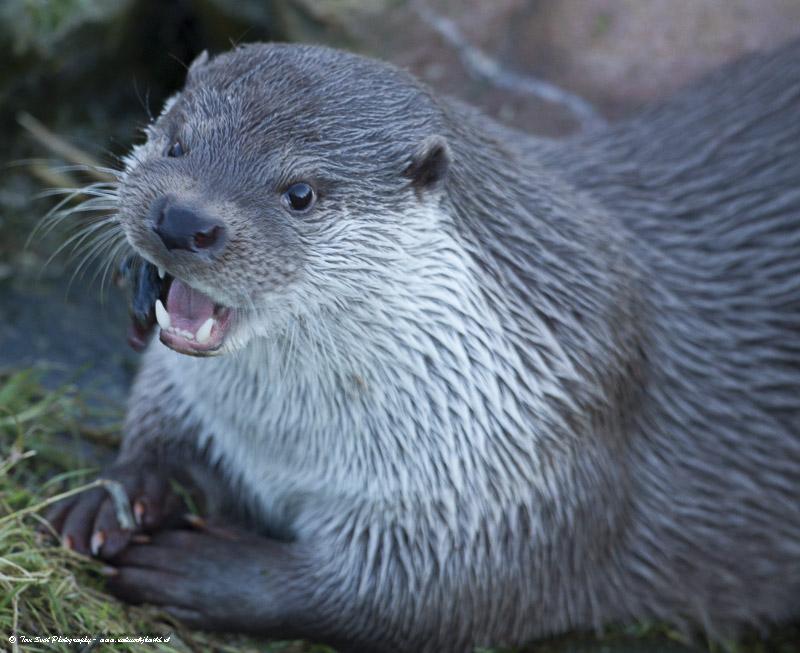 Natuurpark Lelystad – De Otter II