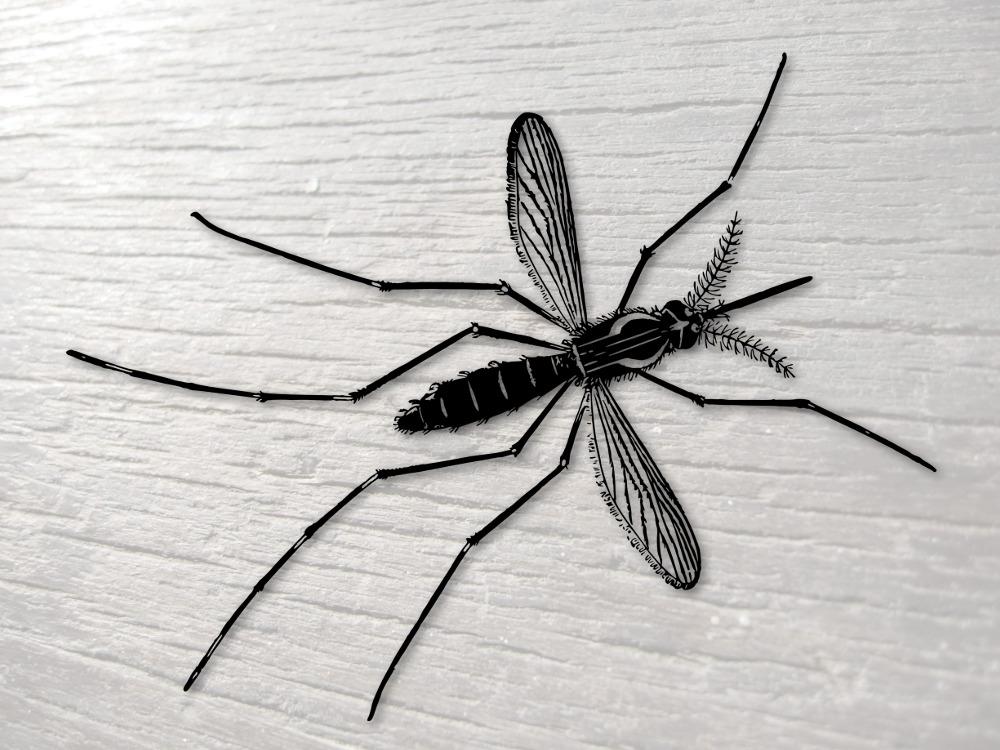 Mengurangi Populasi Nyamuk dengan Menernaknya