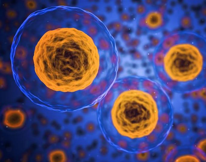 Citologia | Membrana Plasmática