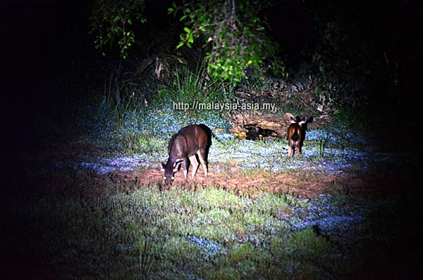 Night Tours in Taman Negara National Park