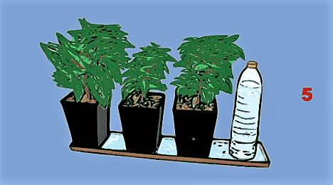 annaffiare-piante-in-modo-automatico-con-poca-spesa