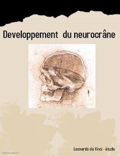 Developpement du neurocrâne