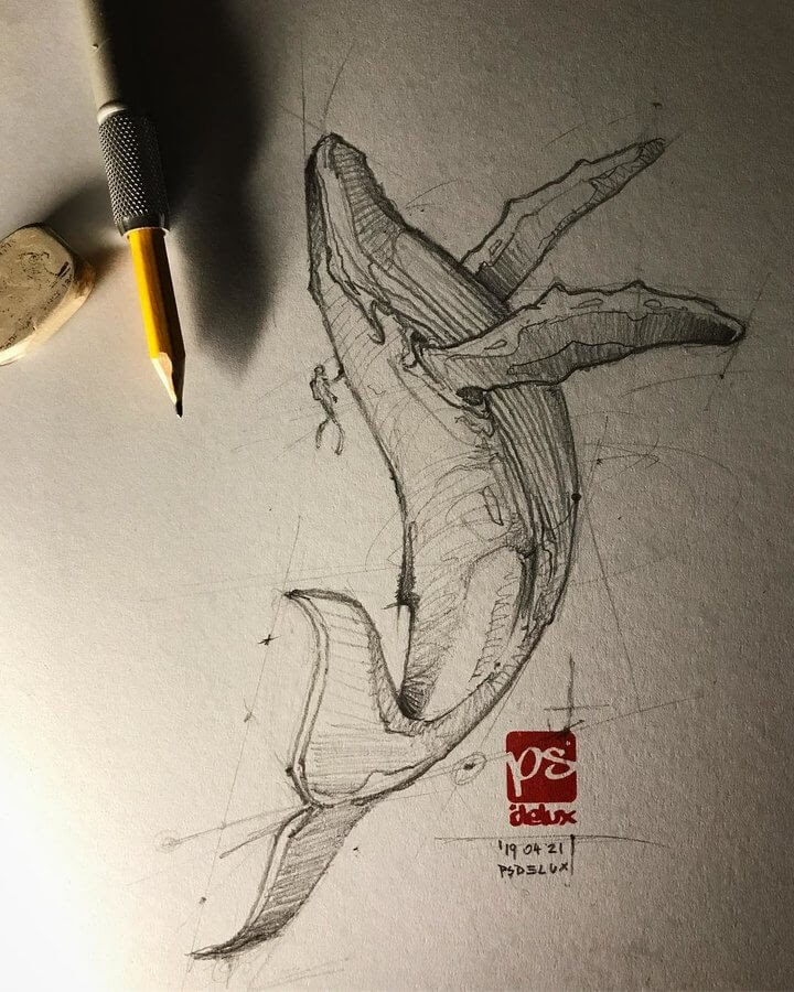 04-Whale-Psdelux-Fineliner-Ink-and-Pencil-Animal-Drawings-www-designstack-co