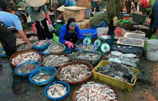 phân bón làm từ cá đặc biệt tự chế tại nhà