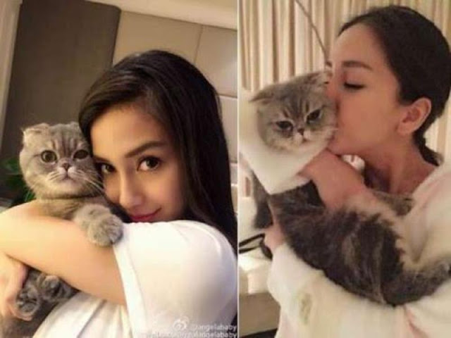 Angelababy cat